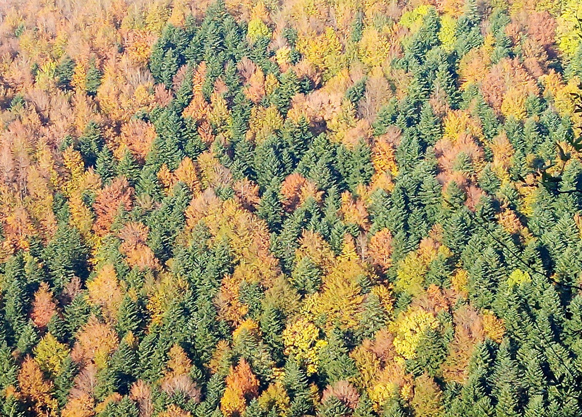 Foresta_della_Lama-img