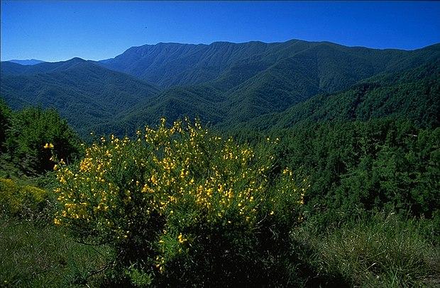 Parco-Nazionale-Foreste-Casentinesi-Alta-valle-del-Bidente-img